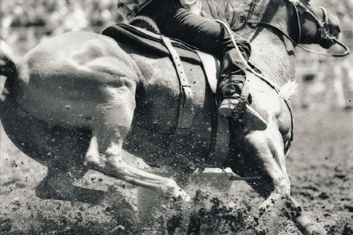 gray-horse.jpg